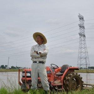 画像2: (株)横田農園 令和2年産 埼玉県吉見町産米