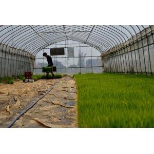 画像2: 農業生産法人 (株)ヤマグレイン 令和2年産 埼玉県吉見町産米